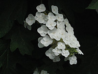 White_150604