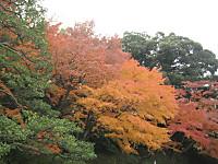 Koisigawa2_151210