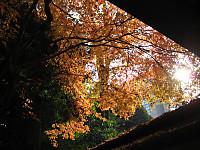 Koisigawa_151210