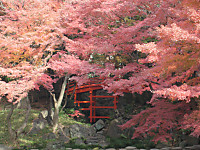 Koisigawa_hasi2_151210