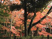Koisigawa_hasi3_151210