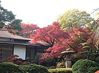 Koisihigawa1_161120