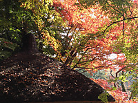 Koisihigawa2_161120_2