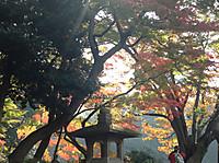 Koisihigawa6_161120