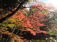Koisihigawa7_161120