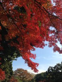 Koisihigawa8_161120