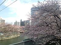 Sakura4_20170406