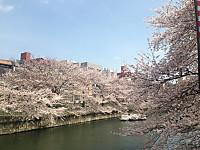 Sakura6_20170406