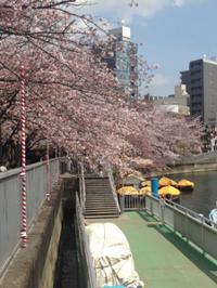 Sakura7_20170406