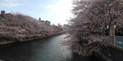Sakurapanorawma_20170406