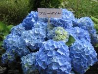 Bluedya