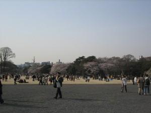 Shibafu_2