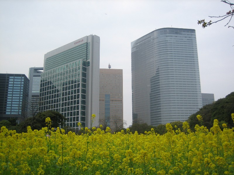 Nanohana2007_1_2