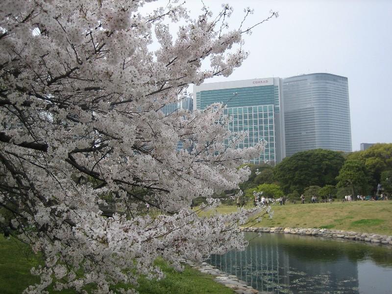 Sakura2007_3_3